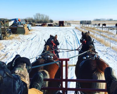 March 7 Sleigh Rides